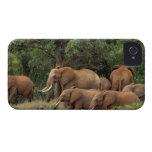 Kenia: El parque nacional del este de Tsavo, reúne iPhone 4 Coberturas