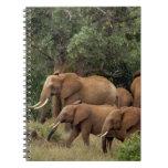 Kenia: El parque nacional del este de Tsavo, reúne Libros De Apuntes Con Espiral