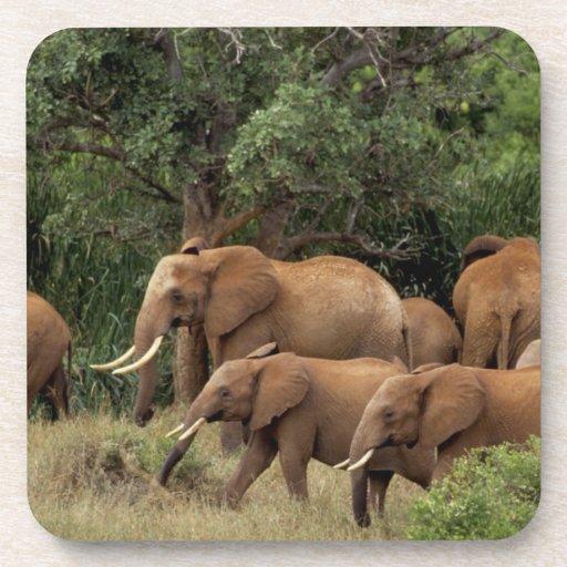 Kenia: El parque nacional del este de Tsavo, reúne Posavasos