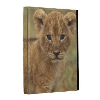 Kenia. León Cub (Panthera Leo)