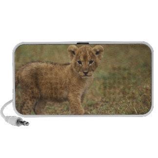 Kenia. León Cub (Panthera Leo) Mini Altavoz