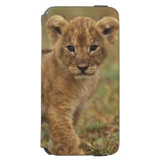 Kenia. León Cub (Panthera Leo) Funda Billetera Para iPhone 6 Watson