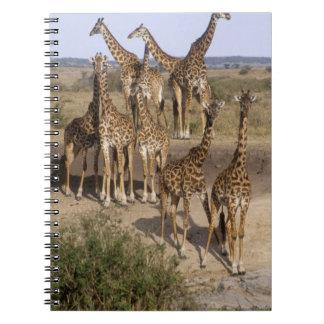 Kenia: Manada de la reserva del juego de Mara del  Libro De Apuntes Con Espiral