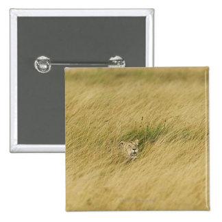 Kenia, Masai Mara 2 Pin Cuadrado