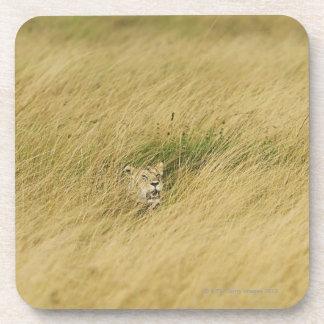 Kenia, Masai Mara 2 Posavasos