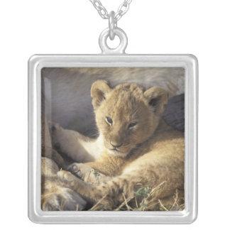 Kenia Masai Mara Cachorro de león viejo de seis Grimpolas Personalizadas