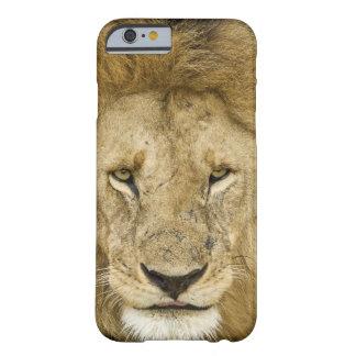 Kenia Masai Mara Dos leones que descansan la