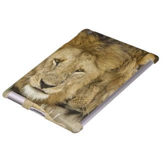 Kenia, Masai Mara. Dos leones que descansan la car Funda Para iPad