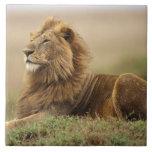 Kenia, Masai Mara. León del varón adulto en termit Teja Ceramica