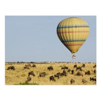 Kenia, Masai Mara. Los turistas montan el globo de Tarjeta Postal