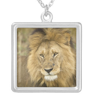 Kenia Masai Mara Primer del león Crédito como Joyeria Personalizada