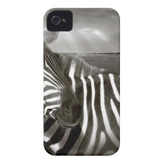 Kenia. Negro y blanco de la cebra y del llano iPhone 4 Cárcasa