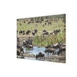 Kenia, ninguna agua ninguna expedición del río de  lienzo envuelto para galerias