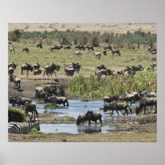 Kenia, ninguna agua ninguna expedición del río de  póster
