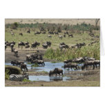 Kenia, ninguna agua ninguna expedición del río de  tarjeton