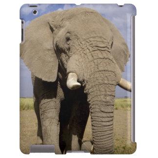 Kenia: Parque nacional de Amboseli, elefante mascu