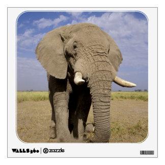 Kenia Parque nacional de Amboseli elefante mascu