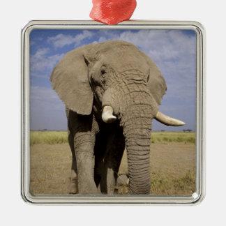 Kenia Parque nacional de Amboseli elefante mascu Ornamento De Navidad
