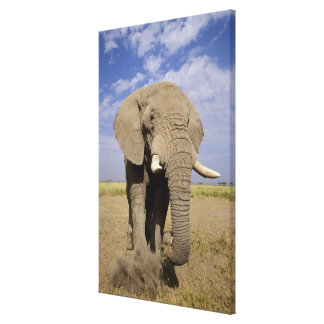Kenia Parque nacional de Amboseli elefante mascu Impresion En Lona