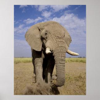 Kenia Parque nacional de Amboseli elefante mascu Impresiones
