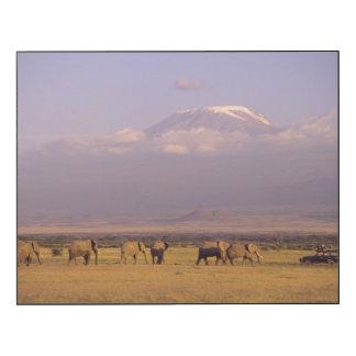 Kenia: Parque nacional de Amboseli, elefantes Impresión En Madera