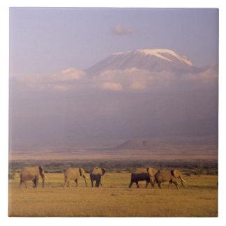 Kenia: Parque nacional de Amboseli, elefantes y Azulejo Cuadrado Grande