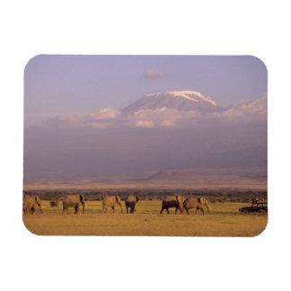 Kenia: Parque nacional de Amboseli, elefantes y Imanes Rectangulares