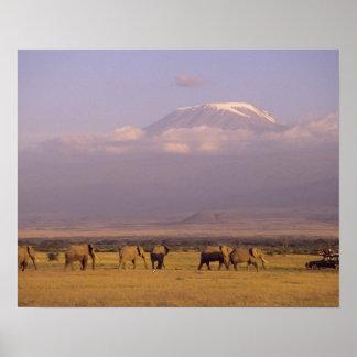 Kenia: Parque nacional de Amboseli, elefantes y Poster