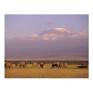 Kenia Parque nacional de Amboseli elefantes y Tarjeta Postal