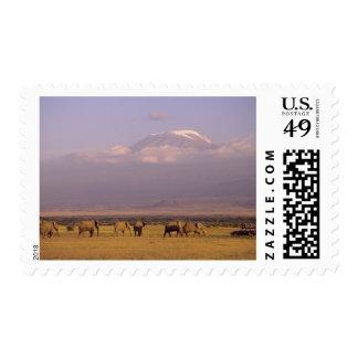 Kenia: Parque nacional de Amboseli, elefantes y Timbre Postal