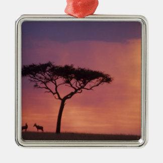 Kenia Parque nacional de Mara del Masai puesta d Ornamento Para Reyes Magos