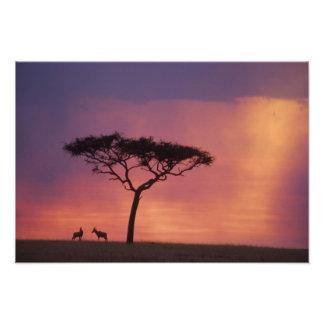 Kenia: Parque nacional de Mara del Masai, puesta d Fotografía