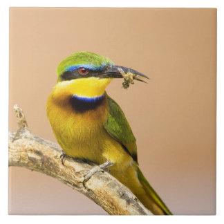 Kenia. Primer del pequeño pájaro del abeja-comedor Azulejo Cuadrado Grande