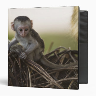 "Kenia, reserva del juego de Samburu. Mono de Verve Carpeta 1 1/2"""