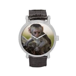 Kenia, reserva del juego de Samburu. Mono de Verve Relojes De Mano