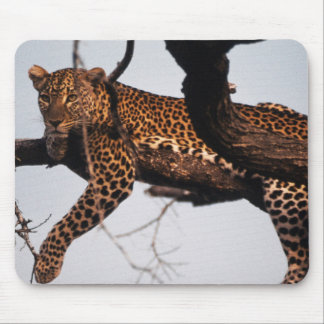 Kenia, reserva Kenia, leopardo del juego de Alfombrilla De Ratones