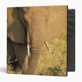 """Kenia, reserva nacional de Samburu. Africano Carpeta 1 1/2"""""""