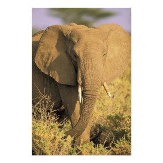 Kenia, reserva nacional de Samburu. Africano Fotografía