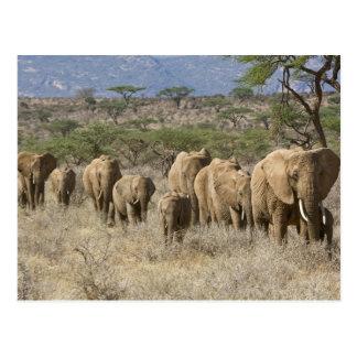 Kenia, reserva nacional de Samburu. Elefantes Tarjeta Postal