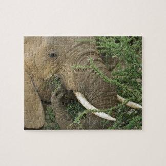 Kenia, reserva nacional de Samburu. Primer de Rompecabezas