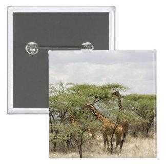 Kenia, reserva nacional de Samburu. Rothschild Pins