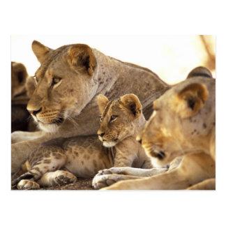Kenia, reserva nacional del juego de Samburu. Tarjetas Postales