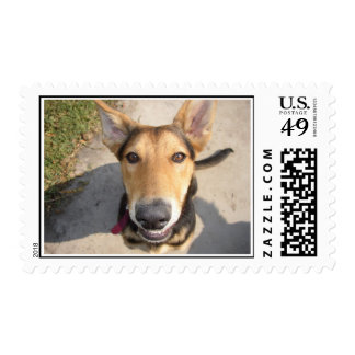 Kenji Stamp