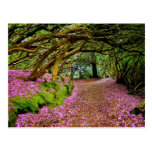 Kenmare Fairy Road Post Card