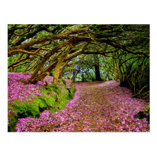 Kenmare Fairy Road Postcard
