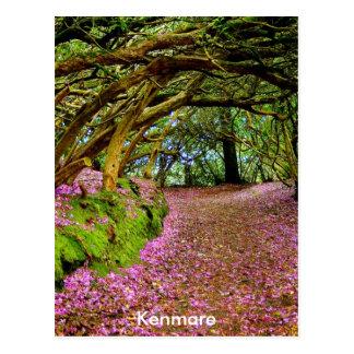 Kenmare Ireland Postcard