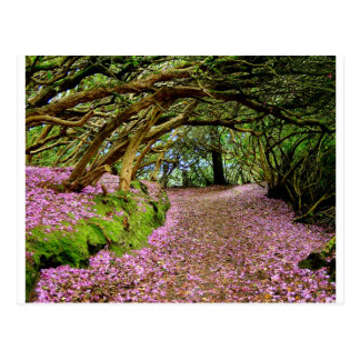 Kenmare Rhododendron Tunnel Postcard