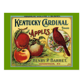 Kentucky Cardinal Bird Postcard