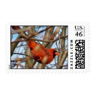 Kentucky Cardinal Stamp
