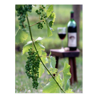 Kentucky Grapes Postcard
